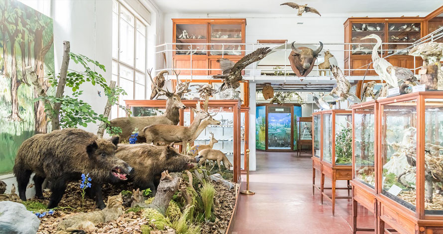 muzeu-zoologic